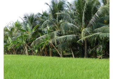 Vietnam towards a development of water management by 2030